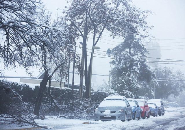 Многие деревья не могли выдержать вес снега. - Изображение: EPA